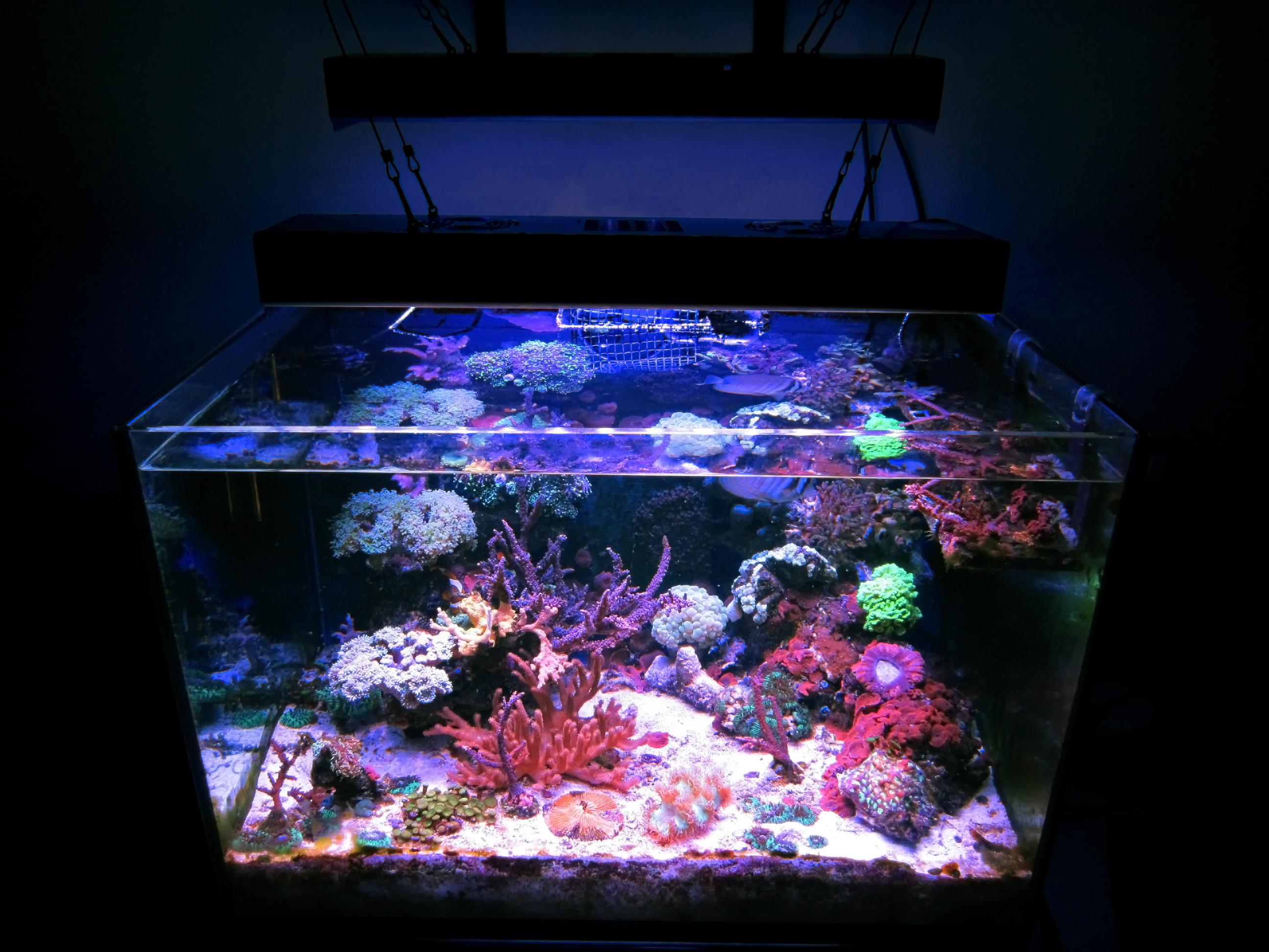Foto acquario marino e aggiornamento for Acquario 100 litri prezzo
