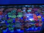 I coralli dai colori più… PIU'!