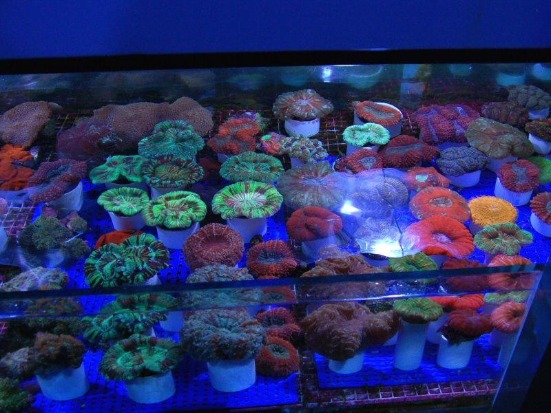 I coralli dai colori pi piu for Acquario per tartarughe grandi