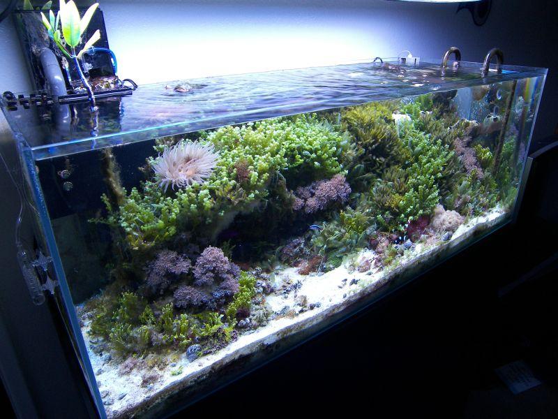 Alg-acquari, gli acquari marini ricchi di alghe