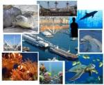 L'acquario di Genova, fra pesci, uccelli e invertebrati.