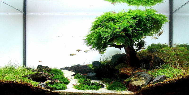 Acquario naturale con tronco e muschio a ricreare un albero for Fondo per acquario