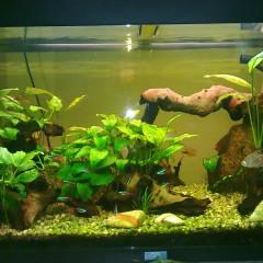 Step-by-Step di un piccolo acquario, con piante facili