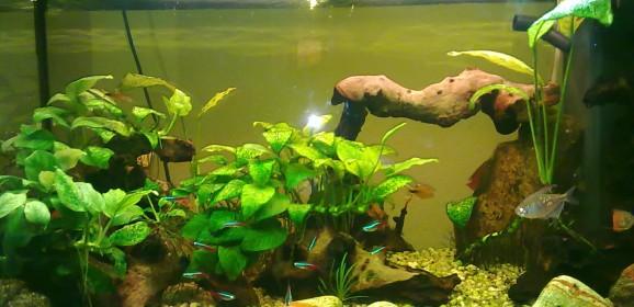 Video di un acquario allestito… niente male!