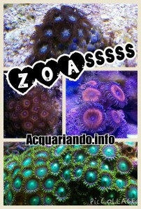 Collage con alcuni dei miei ZOANTHUS