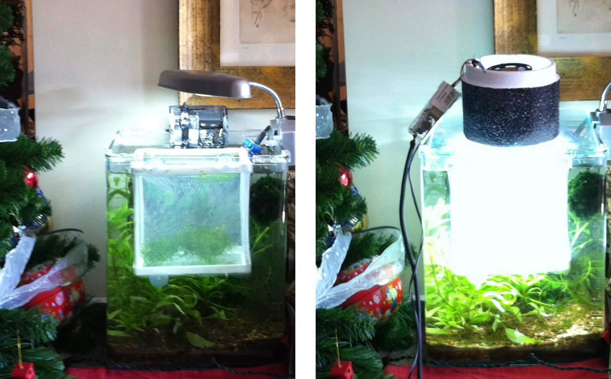 Impianto illuminazione acquario fai da te acquario di