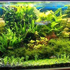 Elementi di aquascaping
