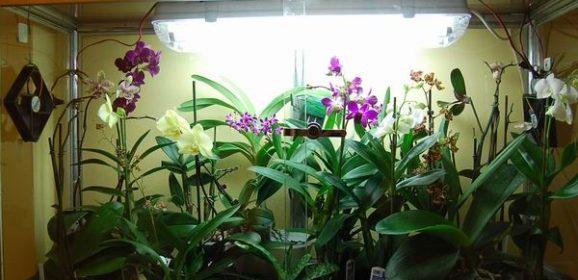 Orchidee in casa: quali altre specie da serra calda?