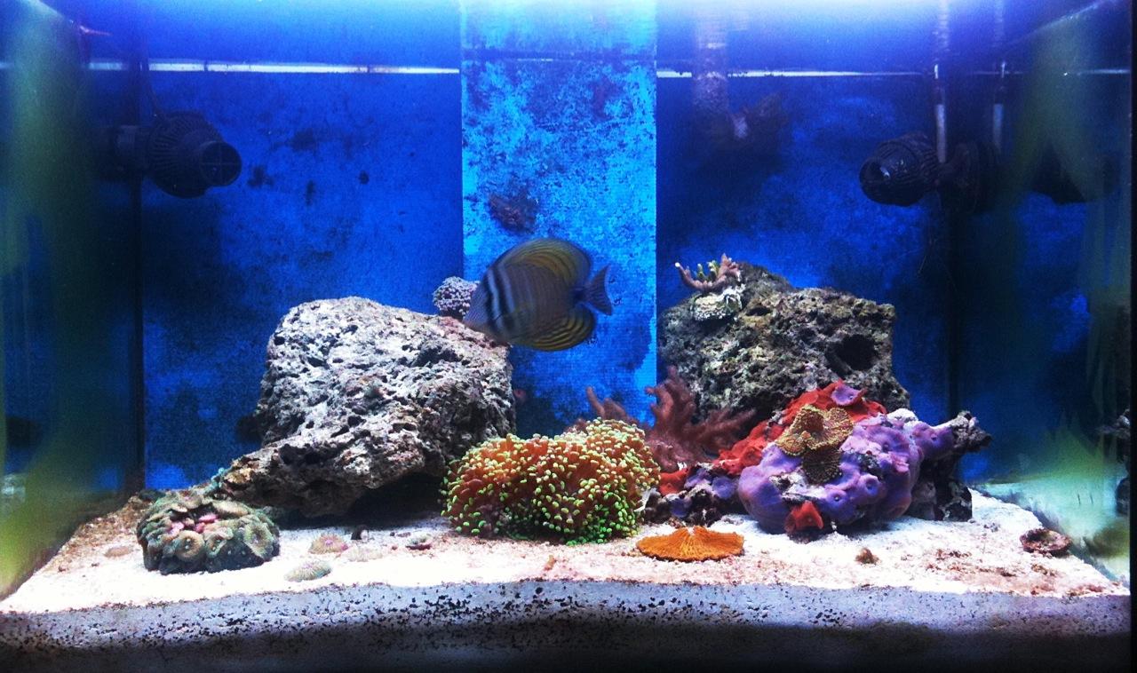 Acquario marino tropicale 80x55x55 easy lps acquariando consigli per acquari con pesci - Pesci e acquario a letto ...