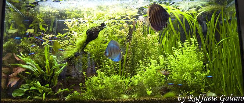 Acquario tropicale d acqua dolce 100x40x56 la scheda for Pesci acqua dolce resistenti