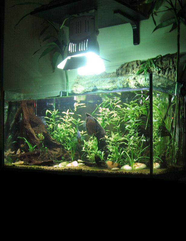 Foto verticale dell'acquario, compresa la parte emersa, faretto, sughero e steli di bambù