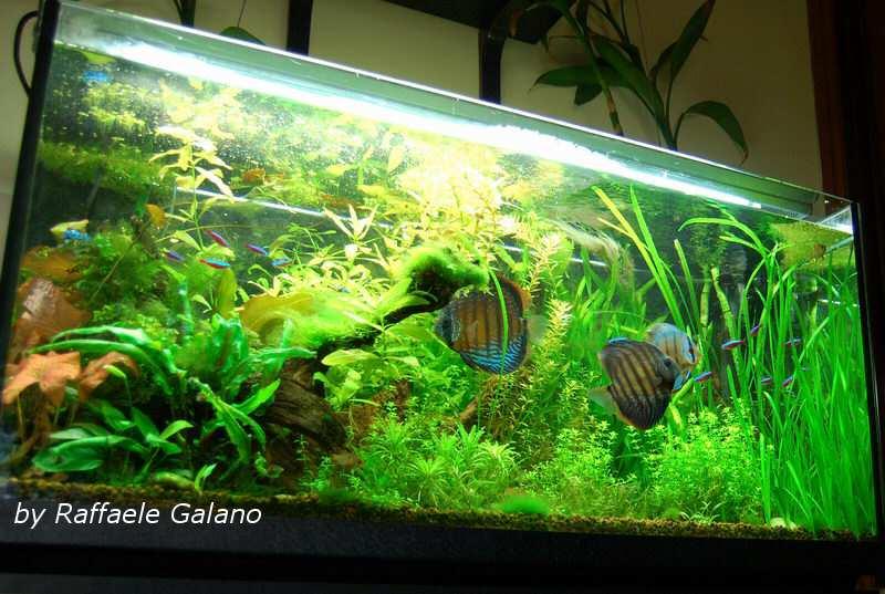 Acquario tropicale d acqua dolce 100x40x56 la scheda for Acqua per acquario
