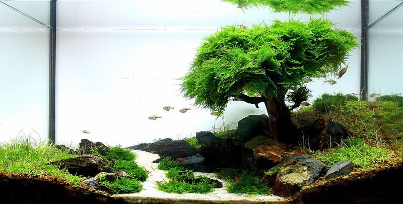 Acquario naturale, con tronco e muschio a ricreare un albero