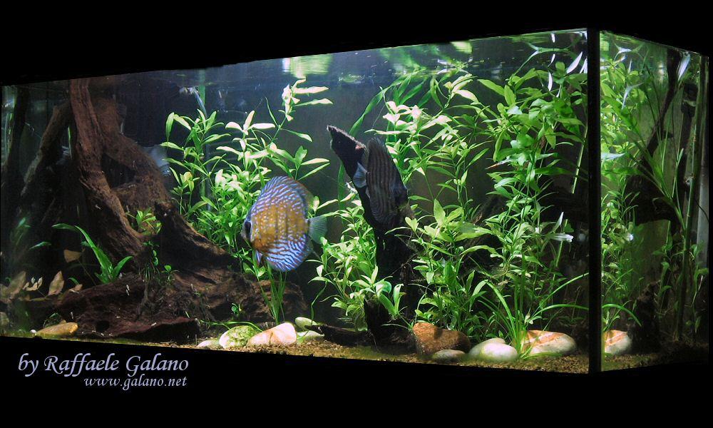Acquario tropicale d acqua dolce 100x40x56 la scheda for Acqua acquario