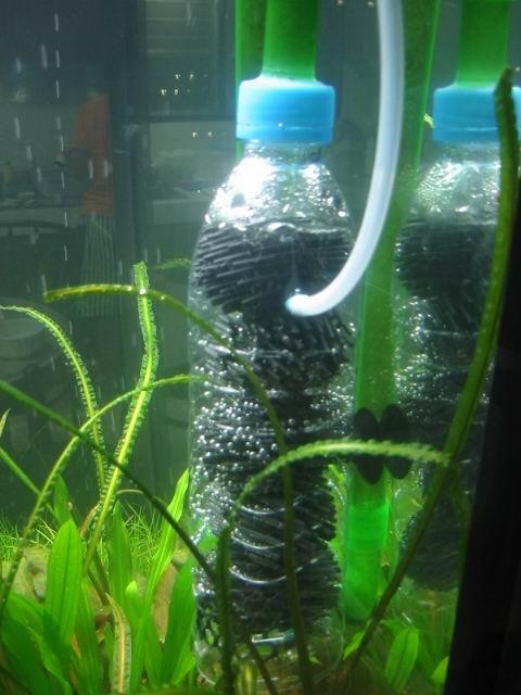 Appunti sparsi fra link e news for Acquario con filtro esterno