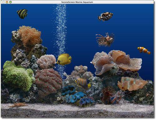 Preview del famoso screensaver per PC AQUARIUM 3d, veramente molto realistico!