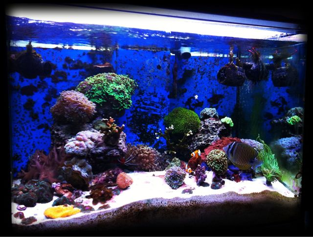 2 foto aggiornate dell acquario marino for Blu di metilene acquario