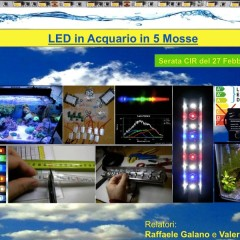 LED in Acquario in 5 Mosse (serata CIR)
