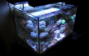 AcqIl mio acquario marino a settembre 2012, come si presenta la sera dopo le 22uario marino a settembre 2012, come si presenta la sera dopo le 22