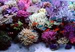 metodo vodka per coralli colorati e non solo