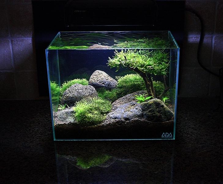 Un bel mini acquario for Pesci per acquario piccolo