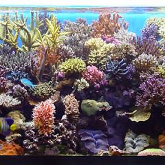 2 acquari marini molto diversi