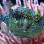 Pesce in un acquario marino...ma che strano!