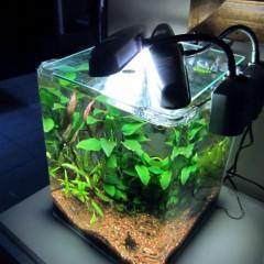 NanoCubo: acquario acqua dolce a cubo