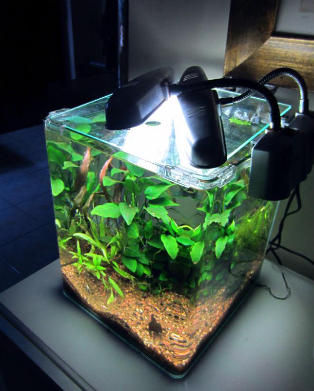 Acquario acqua dolce a cubo di forma cubica fotografie for Pesci per acquario piccolo