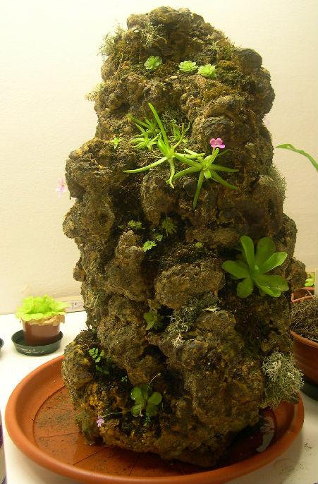 Una strana idea per il giardino la roccia pinguicola for Acquario da giardino