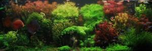 L'acquario tropicale di Sahay Fertig, super-piantumato!
