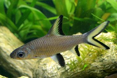 Quali pesci non comprare per l acquario for Comprare pesci online